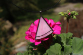 jewel pink with black - Tiffany jewelry