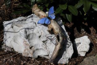 butterflies - Tiffany jewelry